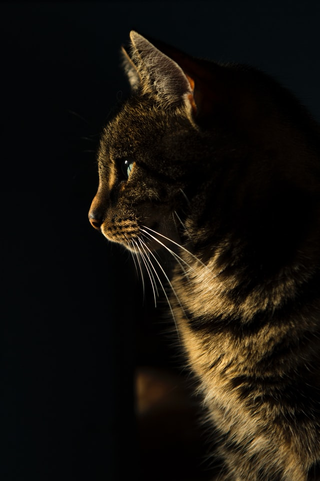 best food for hyperthyroidism in cats